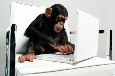chimpanzeetyping